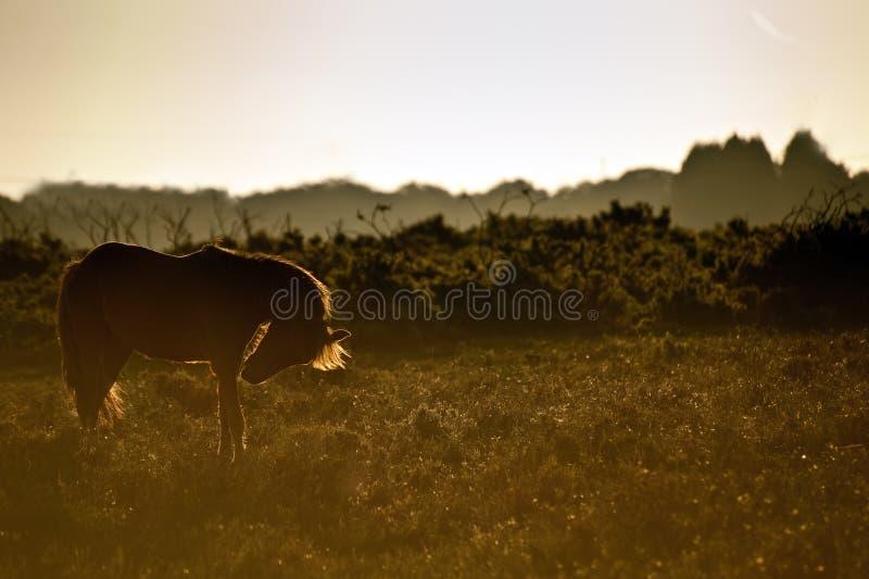 由后面照的森林图象新的小马朝阳 库存照片