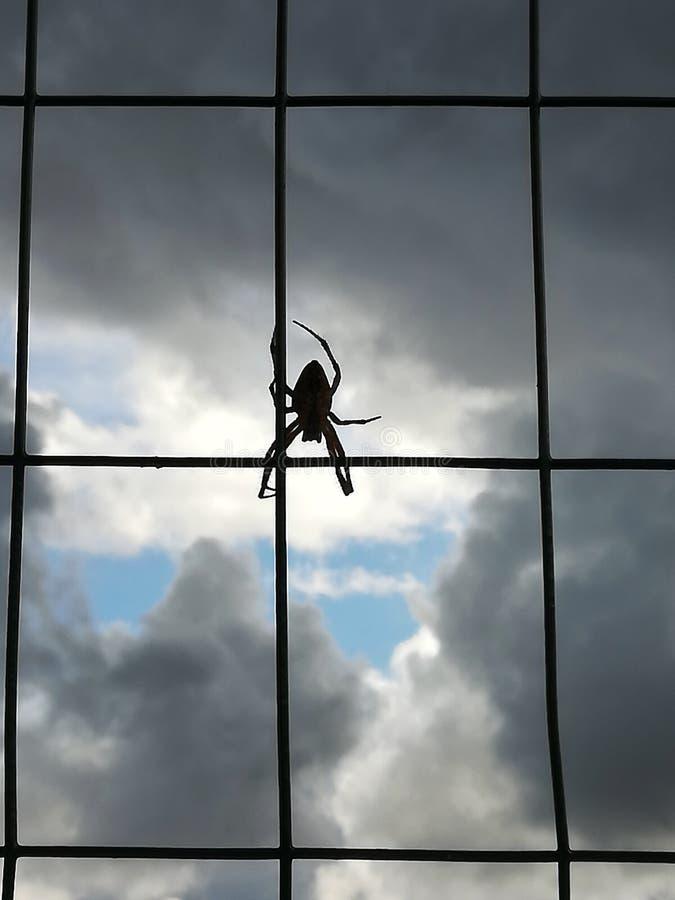 由后面照的观点的在金属篱芭的蜘蛛有天空背景和云彩 免版税库存图片