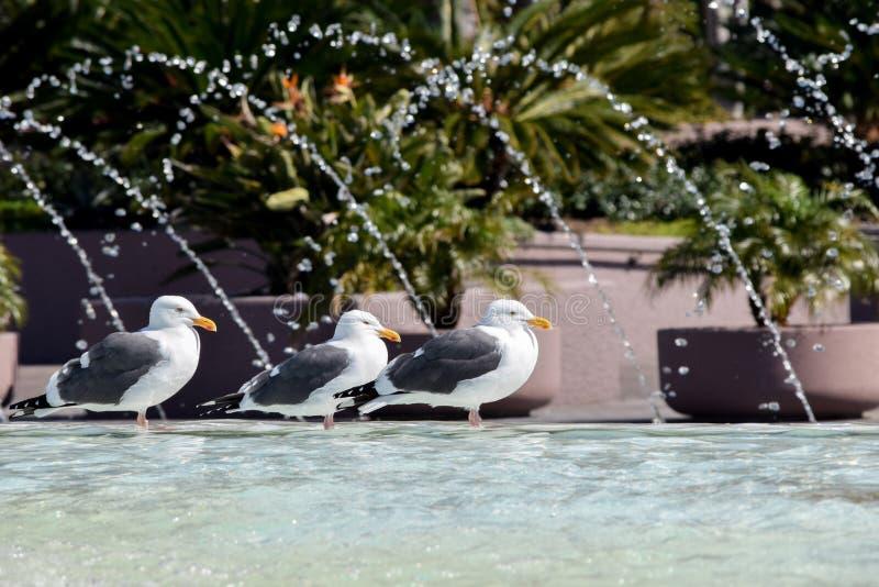 由喷泉的海鸥 库存照片
