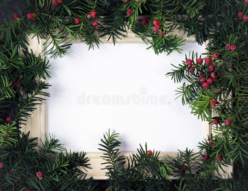由圣诞树做的创造性的布局分支用红色莓果和框架纸牌笔记 复制文本的空间 平的位置 免版税图库摄影