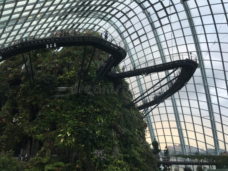 由在新加坡地标的海湾覆盖森林在庭院里 图库摄影