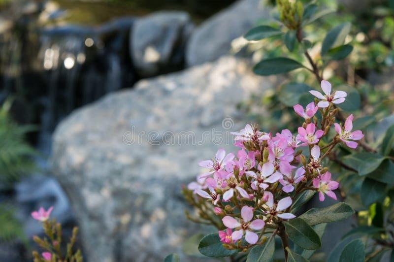 由小河的桃红色花 库存图片