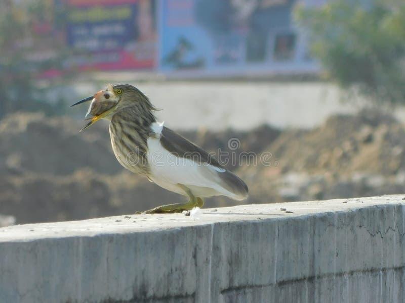 由局外人鸟的鸟类迁徙 库存照片