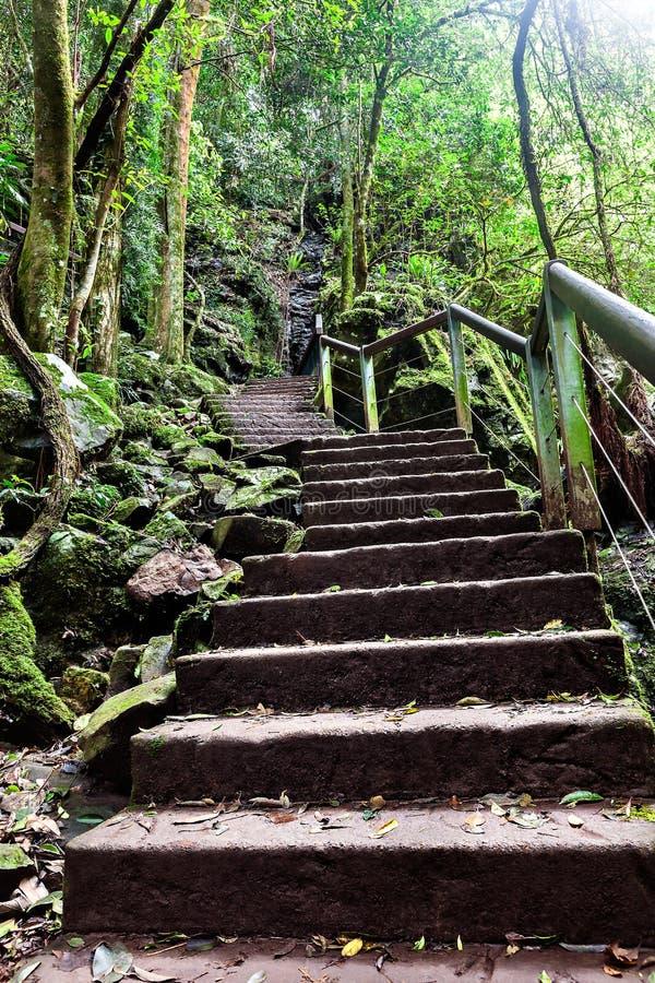 由山决定的石台阶通过密林 免版税图库摄影