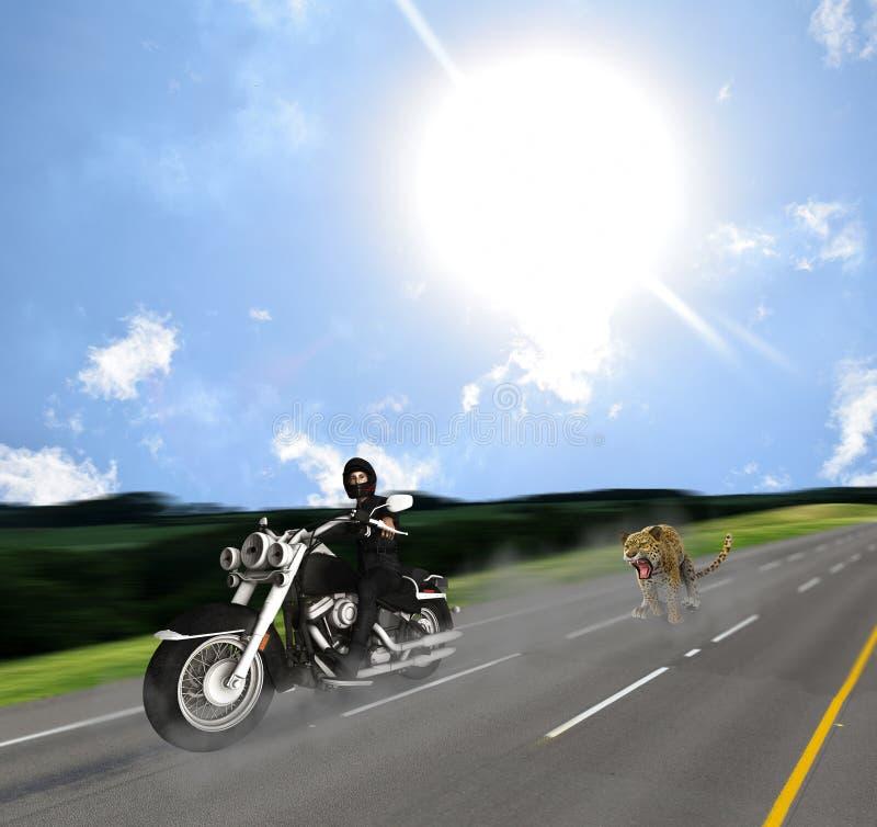 由捷豹汽车的惊奇的骑自行车的人追逐在路