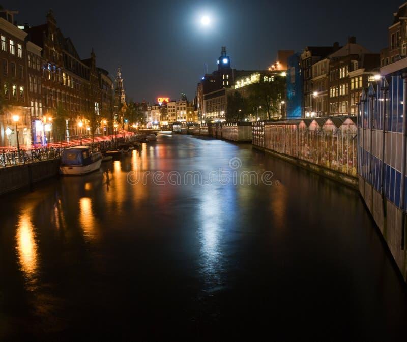 由月光的花市场 图库摄影