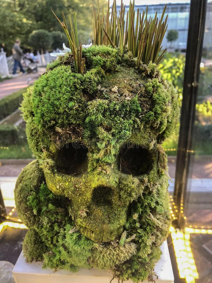 由植物做的人的头骨 免版税库存照片