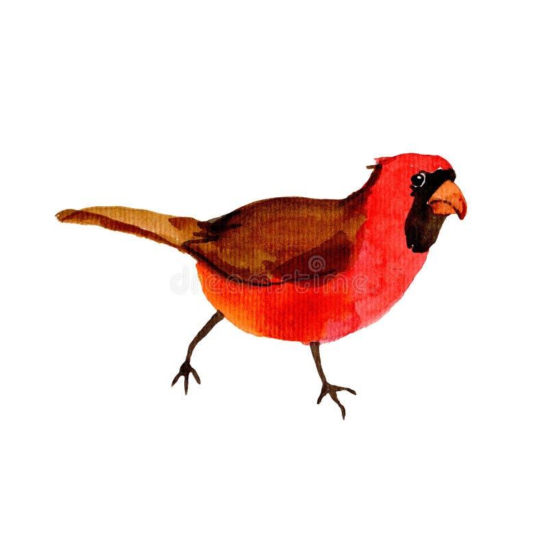 由水彩样式被隔绝的野生生物的天空鸟红色主教 向量例证