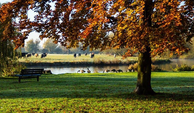 由河伟大的Ouse的公园 免版税图库摄影
