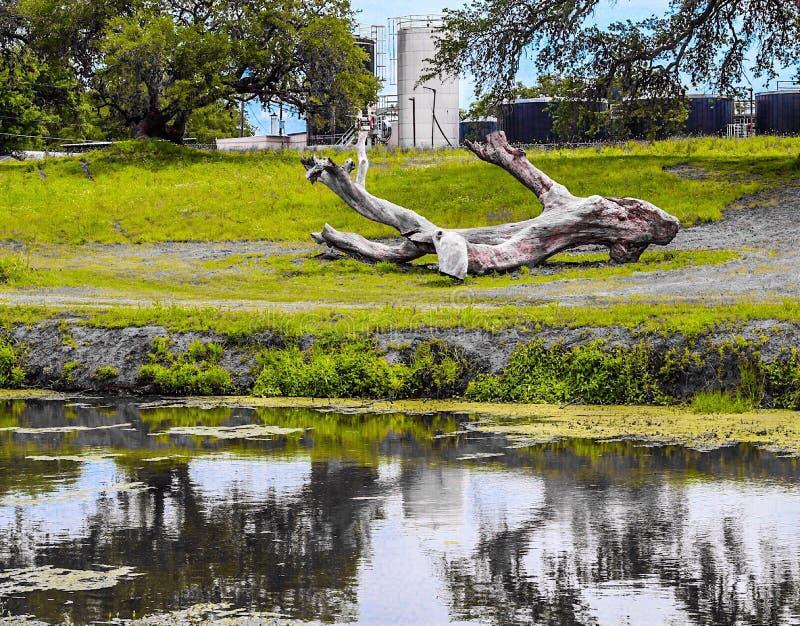 由河沿的下落的日志 库存图片