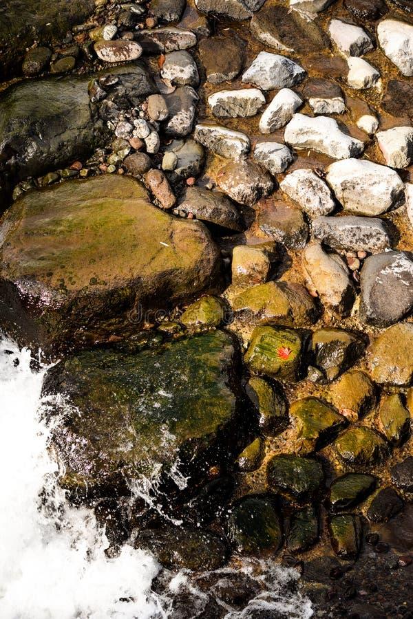 由河的红色叶子 图库摄影