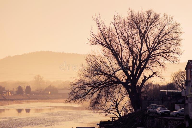 由河露出老树在日落 免版税库存照片