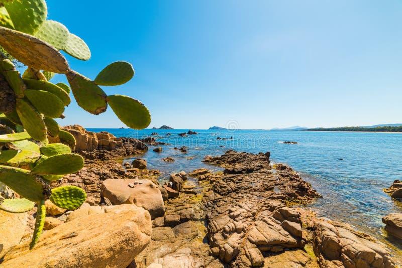 由海的仙人球在圣玛丽亚Navarrese 图库摄影