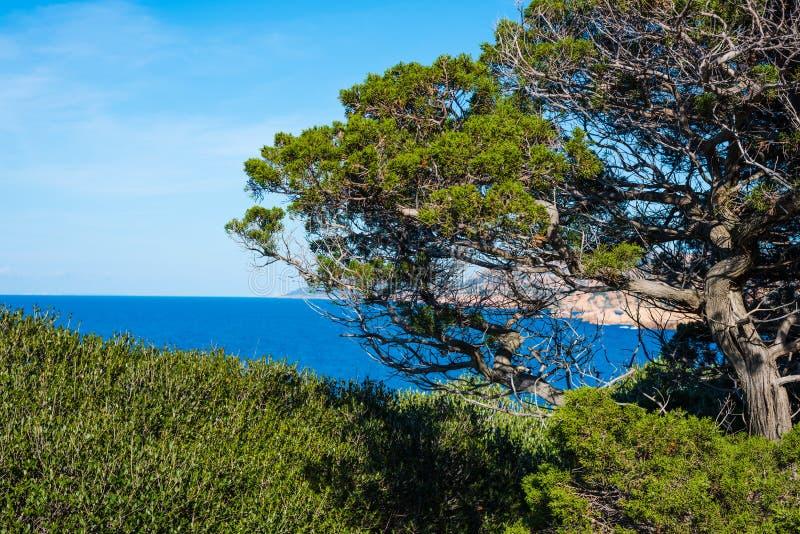 由海的树肋前缘的Paradiso 免版税库存照片