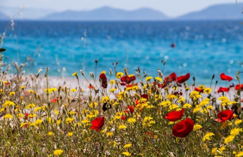 由海的花 Kineta海滩,希腊 免版税库存图片