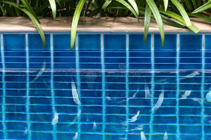 由游泳场和那里反射的植物在水中 游泳场被围拢棕榈树在围场别墅 免版税图库摄影