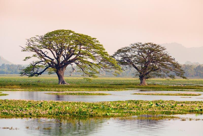 由湖和沼泽的树 库存照片