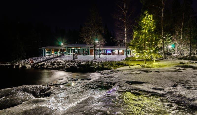 由湖的圣诞树 库存图片