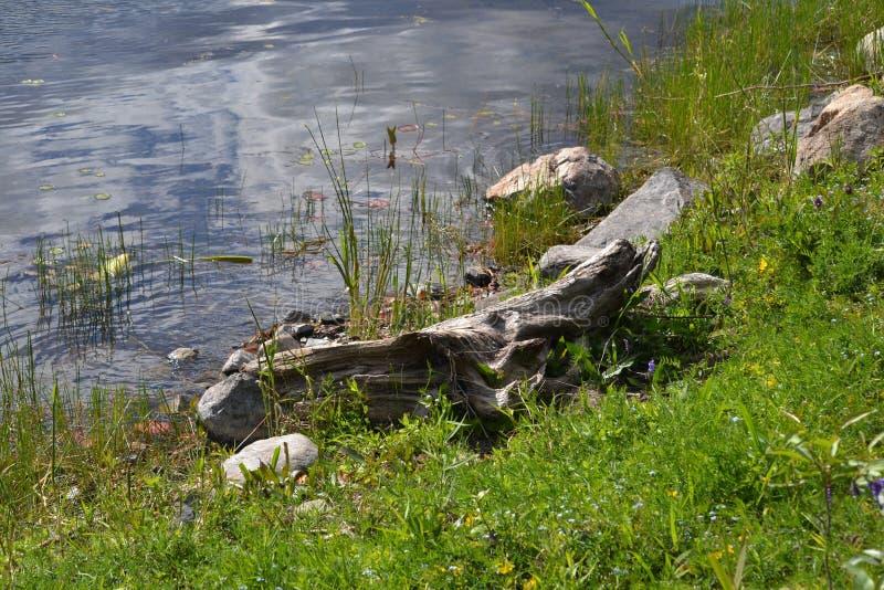 由湖的日志 库存图片