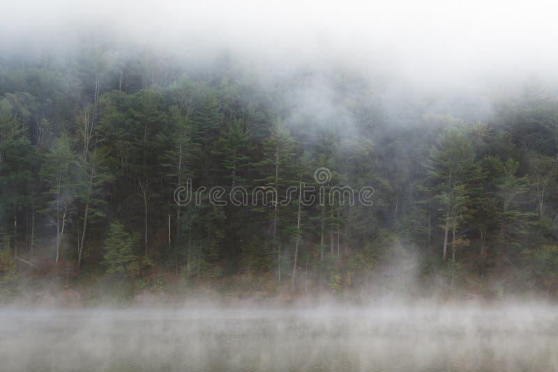 由湖的有雾的森林 免版税库存照片