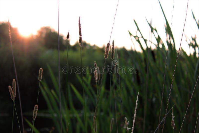 由湖的朝阳 免版税库存照片