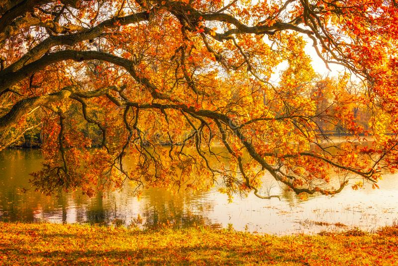由湖的树在秋天期间在Lednice公园 库存照片