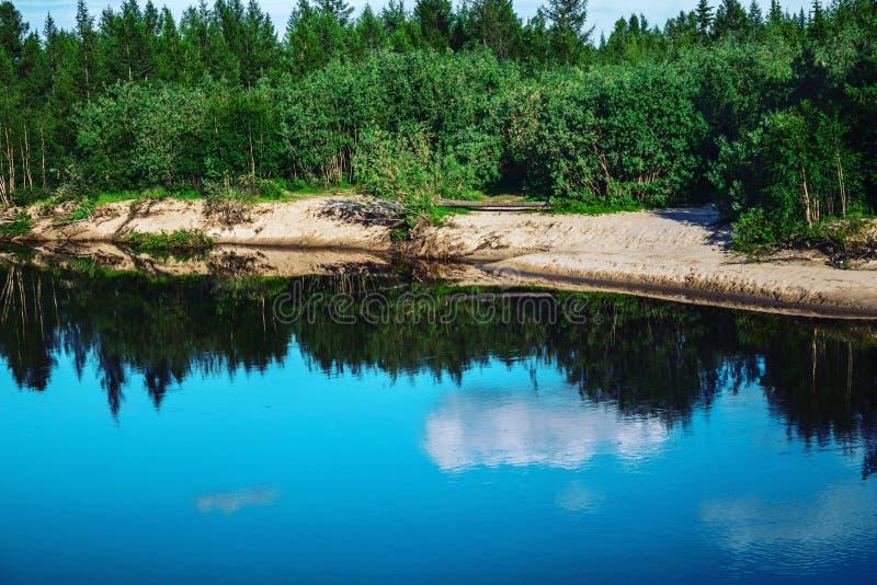 由湖的森林 库存照片
