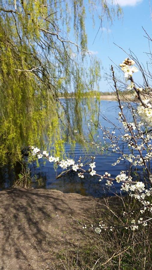由湖的花 图库摄影