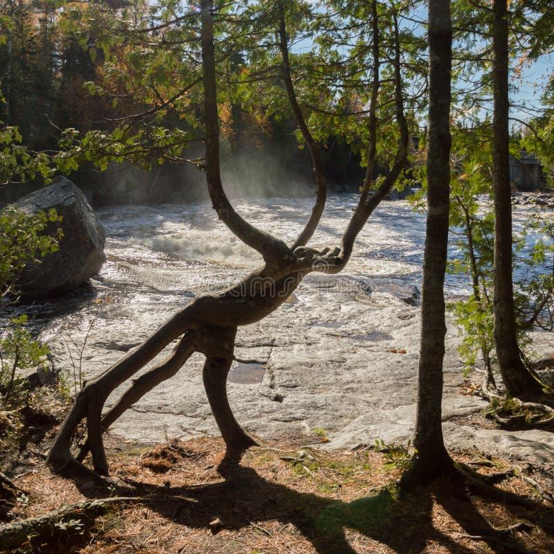 由看起来象一神话cre的瀑布的一根雪松树干 库存照片
