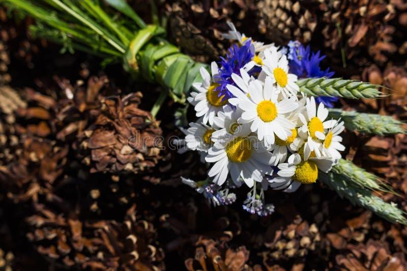由矢车菊做的草甸花,雪夫人,忘记在锥体的我没有和麦子 免版税图库摄影