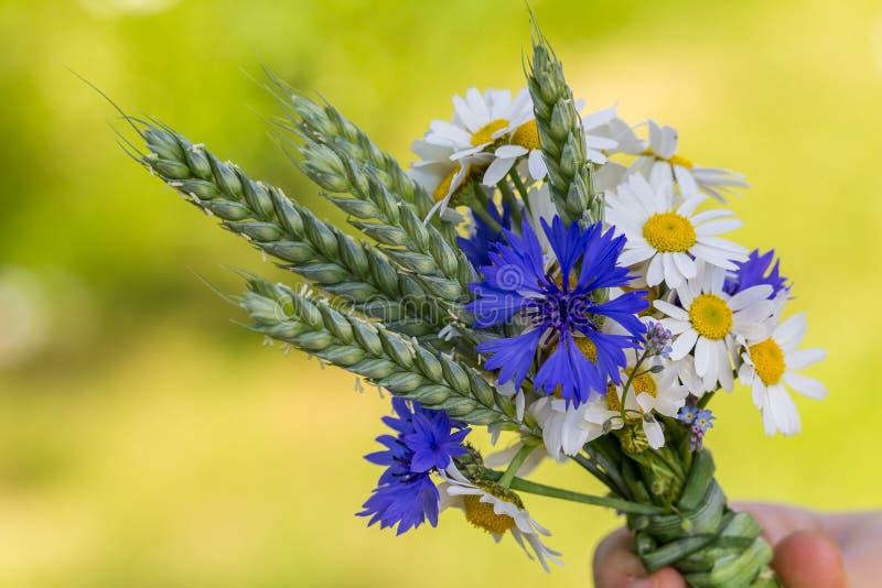 由矢车菊做的草甸花,雪夫人,忘记我没有和麦子 库存图片