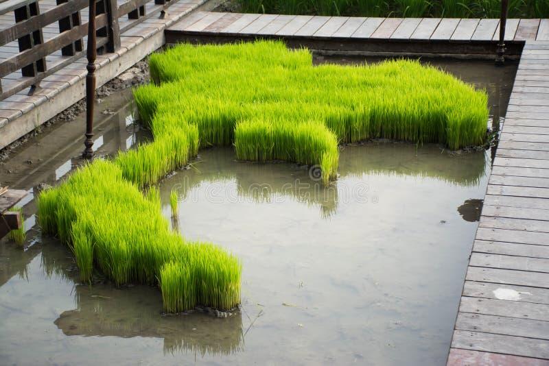 由米耕种做的泰国的旗子 库存照片