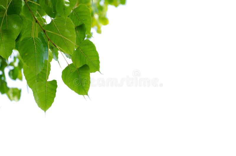 由绿色叶子做的美好的相框在白色背景,相框离开 库存照片