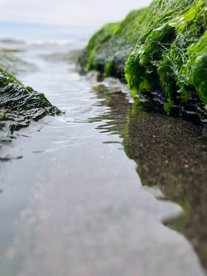 由绿色海草决定的关闭从辣椒海  库存图片