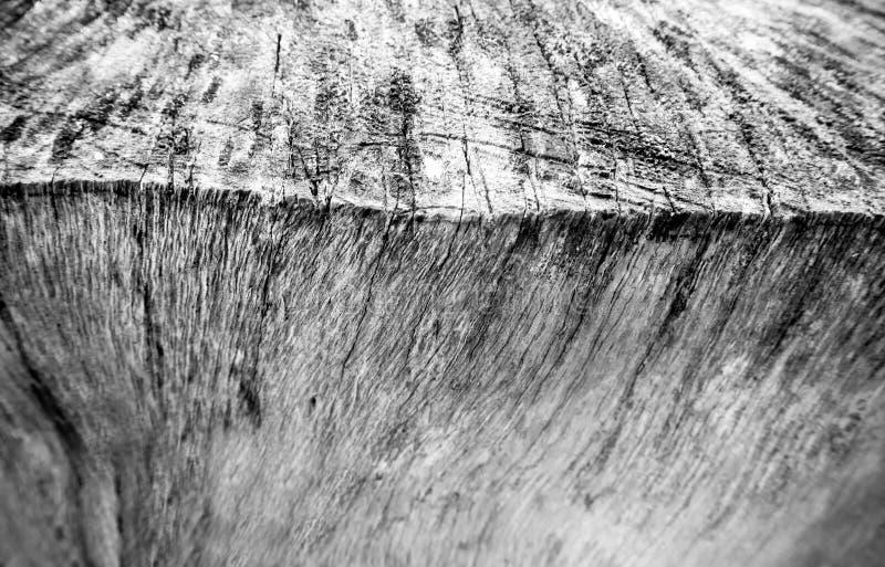 由老树桩表面纹理,木纹理决定的关闭 库存照片