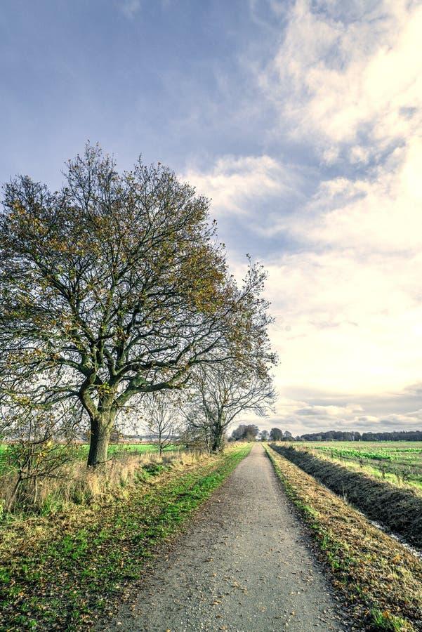 由自然道路的树 免版税库存照片