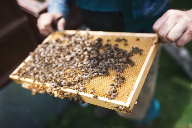 由蜂完全地盖的Beekeper与蜂窝一起使用 在apiaristÂ的手上的细节 免版税库存图片