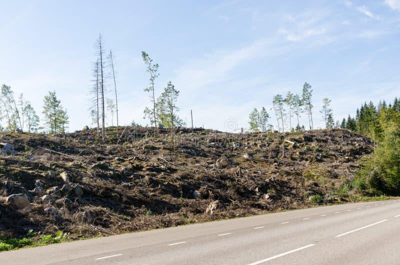 由路旁的清楚森林 库存照片