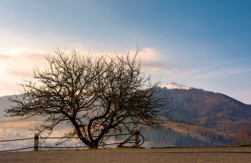 由路的不生叶的树在山 库存照片