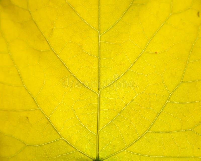 由阳光的秋天五颜六色的叶子纹理 免版税图库摄影