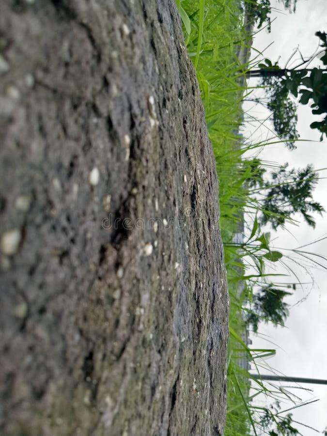 由雨的雨生气勃勃在长的尖叉以后 图库摄影