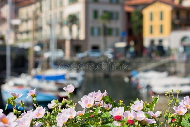 由Como湖,意大利的花 免版税库存照片