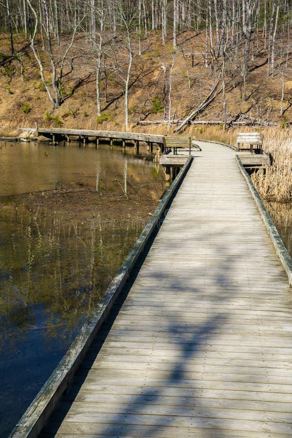 由Pandapas池塘的木板走道 库存图片