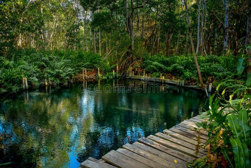 由Ria Celestun湖的美洲红树森林 免版税库存图片