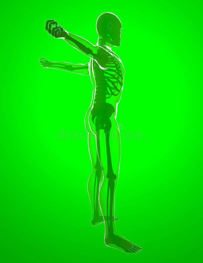 由X-射线的人体,舒展 向量例证