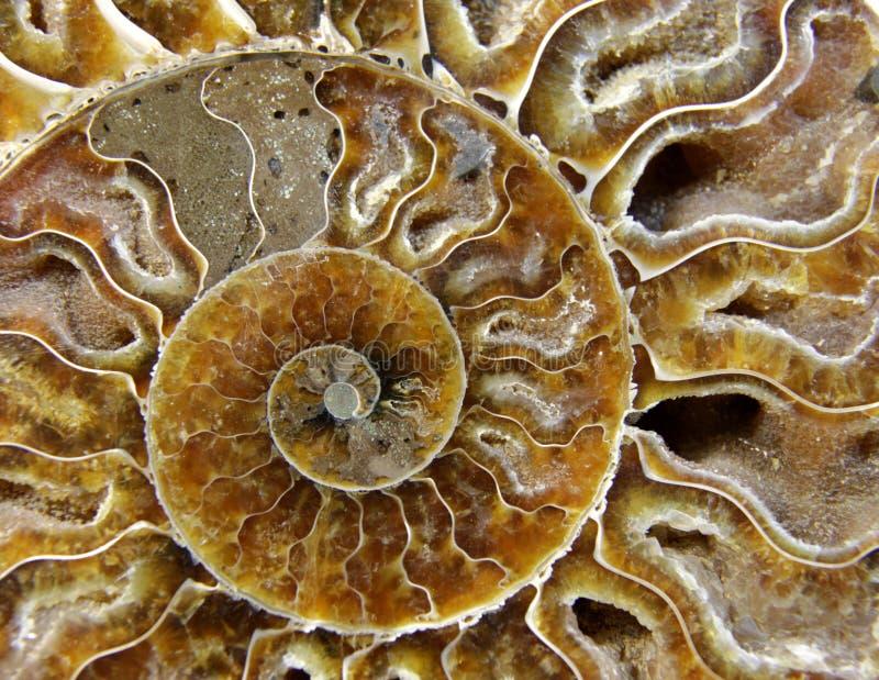 甲壳动物的化石 免版税图库摄影