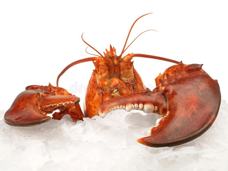 甲壳动物-在冰的龙虾 库存图片