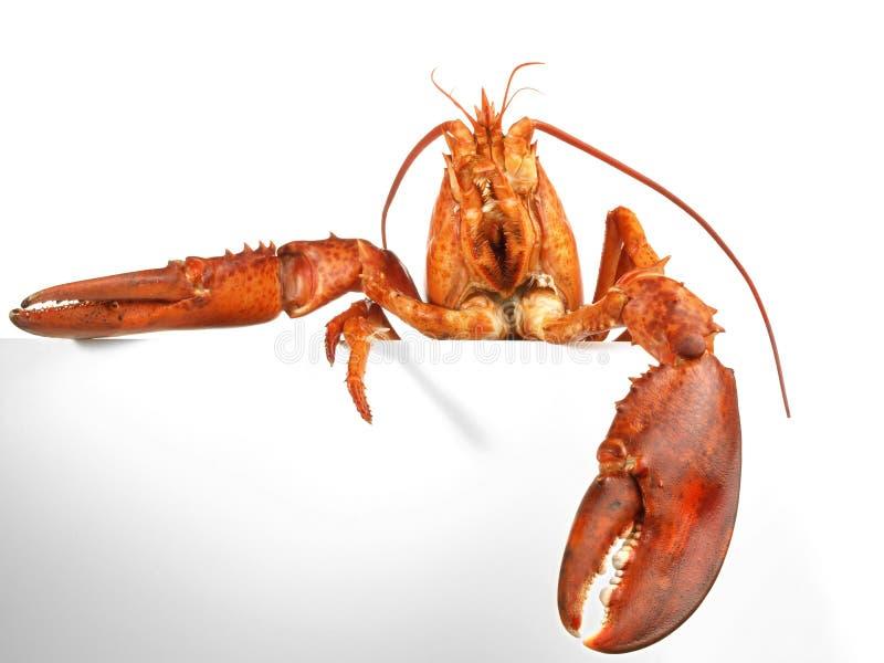 甲壳动物-龙虾藏品在白色背景的菜单卡片 库存图片
