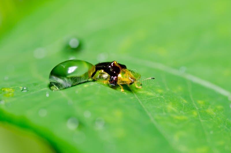 Download 甲虫绿色本质桔子 库存图片. 图片 包括有 微小, browne, 地点, 行程, 眼睛, 五颜六色, 宏指令 - 22356339
