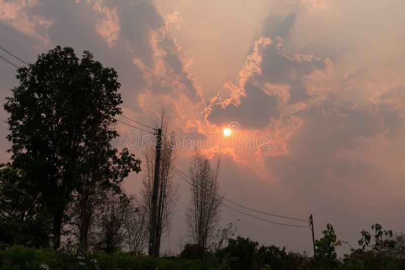 电杆和树剪影与日落天空 库存图片